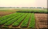 農業(農場)視察